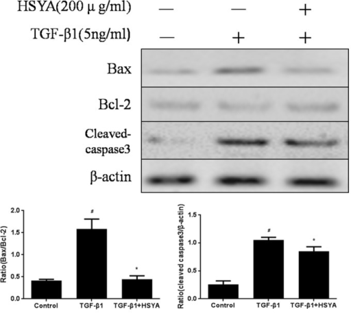 Effect of HSYA on TGF-β1-induced Apoptosis in HK-2 Cells.The apoptosis-relative protein level of Bax, Bcl-2 and cleaved caspase3 were measured. Semi-quantitative data from densitometric analysis of Bax, Bcl-2 and caspase3 are presented as relative ratio of each protein to β-actin. Data are expressed as mean±SD, n = 3, #P<0.05 compared with control group; *P<0.05 compared with TGF-β1-stimulated group.