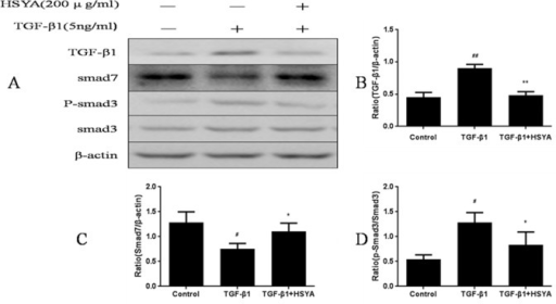 Effect of HSYA on TGF-β1/Smads signaling pathway in HK-2 cells.Western blotting was performed to detect TGF-β1, Smad3, p-Smad3, Smad7 protein levels, and β-actin was used as a loading control (A). Semi-quantitative data from densitometric analysis of TGF-β1 and Smad7 are presented as relative ratio of each protein to β-actin, p-Smad3 are presented as the ratio to Smad3 (B-D). Data are expressed as mean±SD, n = 3, #P<0.05,##P<0.01compared with control group; *P<0.05 compared with TGF-β1-stimulated group.