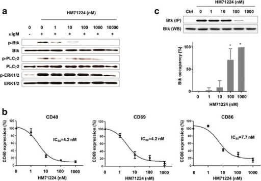 HM71224 inhibits human B cell activation. a Healthy primary human CD19+ B cells (n = 3) were activated with anti-IgM F(ab')2 fragments in the presence of increasing concentrations of HM71224. Phosphorylation of Bruton's tyrosine kinase (Btk) and PLCγ2 in human B cells was inhibited in a dose-dependent manner. The immunoblot shown is representative of three independent experiments. b HM71224 inhibits the surface expression of CD40, CD69, and CD86 by activated B cells. c Percentage of Btk sites on human peripheral blood mononuclear cells (PBMCs) occupied by HM71224, as measured by a biotinylated probe. *P < 0.001 vs. 0 nM HM71224. ERK extracellular signal-regulated kinase
