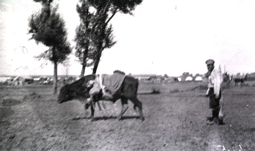 <p>A soldier(?) walks behind a cow transporting supplies(?).</p>
