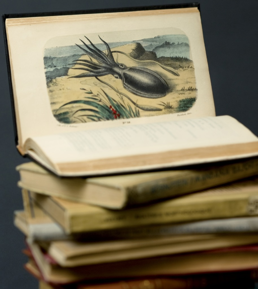 <p>Image of a stack of books with the top one open showing a drawing of a cuttlefish resting on a beach.  Materia medica animalia, pl. 18.</p>