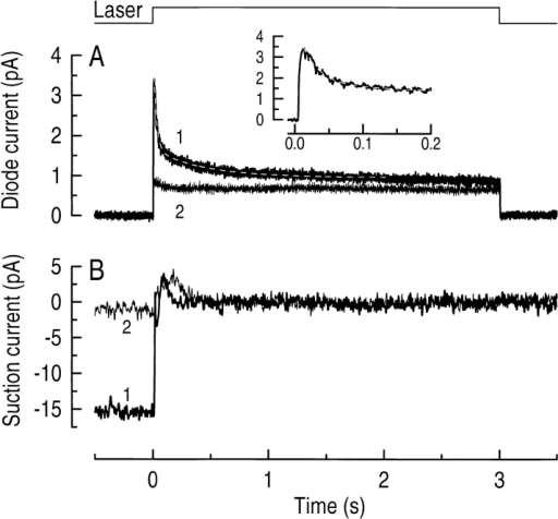 Simultaneous measurements of fluo-3 fluorescence  and circulating current from a red-sensitive cone during a 3-s laser  exposure. (A) Fluo-3 fluorescence signal excited by the laser spot  and recorded by the photodiode. (B) Circulating current measured by the suction pipette in response to the laser exposure. In  each case, 1 represents the first exposure of the dark-adapted cone  to the laser spot and 2 shows the response to a second laser exposure 10 s later. The light-induced decline in fluo-3 fluorescence (A,  1) could be fitted with the sum of two exponentials with time constants of 27 and 430 ms using a least-squares algorithm. The residual decline in fluo-3 fluorescence seen at the onset of the second  laser exposure (A, 2) is likely to correspond to the small recovery  in circulating current that had taken place at that time (B, 2). The  initial peak in the suction pipette recording (B) is likely to represent contamination of the photoresponse by voltage-sensitive conductances in the cone inner segment (Barnes and Hille, 1989).  The top trace is the laser light monitor. (Inset) The fall in fluo-3  fluorescence during the first 200 ms with the same exponential fit  as described above.