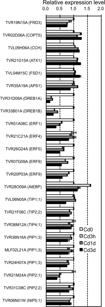 Time-course changes of the expression of the 23 TB unigenes in the roots during Cd treatment. TB plants were hydroponically grown and CdCl2 was added to the culture solutions at a final concentration of 0.1 μM. The roots were harvested 3 h (Cd3h), 1 d (Cd1d), or 3 d (Cd3d) after the start of treatment, together with untreated roots (Cd0). The relative amount of transcripts of individual TB unigenes in the roots was determined by real-time RT-PCR. Expression levels of the unigenes in Cd-treated roots relative to those in untreated roots were calculated using a unigene TVR18P14C (a ubiquitin gene) as a standard control. Bars indicate standard errors (n=4).