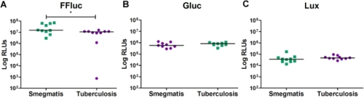 Bioluminescence levels in M. tuberculosis and M. smegmatis are comparable in vitro.Relative light units (RLUs) were measured in 10 M. smegmatis and 10 M. tuberculosis clones transformed with pMV306hsp+FFluc (a), pMV306hsp+Gluc (b) or pMV306hsp+Lux (c). Results are corrected for the background. Statistical significance was evaluated by the Mann-Whitney non-parametric test for Lux, and by unpaired t test for FFluc and Gluc (data normality passed) and those found to be significant (p<0.05) are indicated with *.