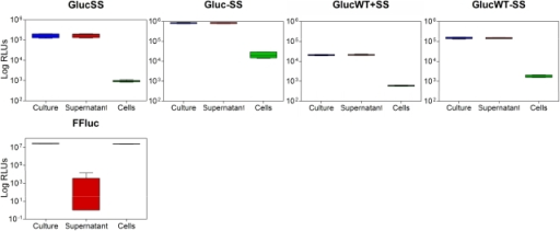 Gaussia luciferase is secreted from mycobacterial cells.Luminescence (given as relative light units [RLUs]) was measured in culture, supernatant and cell samples of M. smegmatis producing Gluc Mycobacterium optimised with (GlucSS) or without (Gluc) signal peptide, Gluc wild-type with (GlucWT+SS) or without (GlucWT-SS) signal peptide, and FFluc as control. Assays were performed with three independent cultures and each culture was measured in duplicate. As the data was not normally distributed, median values are displayed (bar) with inter-quartile ranges (box), and highest and lowest values (whiskers).