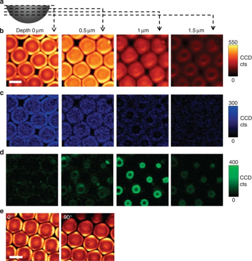 Confocal Raman spectroscopic imaging of the CaCO3 microlens array.(a) Schematic illustration of the depth scan. (b–d) Depth scanned Raman imaging obtained by integrating over the wavenumber ranges of (b) carbonate (1,040–1,125 cm−1), (c) water (3,000–3,500 cm−1) and (d) organic components (2,800–3,000 cm−1), respectively. The images in the same column indicate the same depth. (e) Raman imaging of carbonate at 0° and 90° polarization of incident laser light. All the scale bars are 5 μm. CCD cts, charge-coupled device counts.