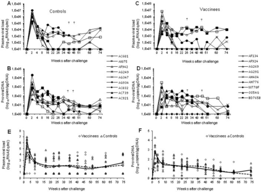 Quantitation of viral load upon intravenous virus challenge with SHIV89.6Pcy243 in control and vaccinated monkeys.In the left panels are reported the (A) plasma viremia and (B) the proviral DNA of control macaques. In the right panels are reported the (C) plasma viremia and the (D) proviral DNA of vaccinated macaques. In the bottom panels are indicated the trend line as a LOESS smoothed average of (E) plasma viral RNA and (F) proviral DNA of vaccinated (dashed line) and control (continous line) macaques. Statistical analyses were performed according to the Regression model for correlated data (means with 95% confidence limits).