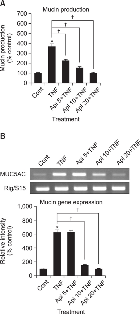 Effect of apigenin on TNF-α-induced MUC5AC mucin production and gene expression. NCI-H292 cells were pretreated with various concentrations of apigenin (5, 10 and 20 μM) for 30 min and then stimulated with TNF-α (10 ng/mL) for 24 h. Cell lysates were collected for measurement of MUC5AC mucin production by ELISA. Three independent experiments were performed and the representative data were shown. Each bar represents a mean ± S.E.M. of 3 culture wells in comparison with that of control set at 100% (A). MUC5AC mucin gene expression was measured by RT-PCR. As quantitative control, Rig/S15 rRNA, which encodes a small ribosomal subunit protein, a housekeeping gene that was constitutively expressed, was used. Three independent experiments were performed and the representative data were shown (B). *significantly different from control (p<0.05). †significantly different from TNF-α alone (p<0.05). (cont: control, Api: apigenin, TNF: TNF-α, concentration unit is μM).