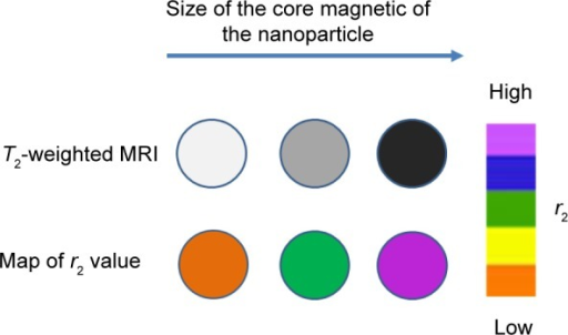 T2-weighted contrasts and r2 color maps for iron oxide nanoparticles of different size.