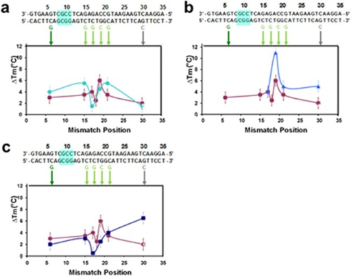 Effect of M on melting curves: differences between the ΔTm for a perfectly matched 35 bp sequence with and without abasic sites and various single bp mismatches in 150 mM NaCl.The sequence is shown in black at the top of the figure. The mismatches are shown below the sequence. In all graphs, the purple squares correspond to a 35 bp sequence without abasic sites for the R data except for the mismatch at position 30 which was taken from the L data. (a) Results for 35 bp sequence with 5 abasic sites where M = 6 (aqua circles). (b) Results for another case where M = 6 shifted by two base pairs from the system shown in (a) (blue triangles). (c) Results for 35-bp sequences with 3 abasic sites where M = 8 (dark blue squares).