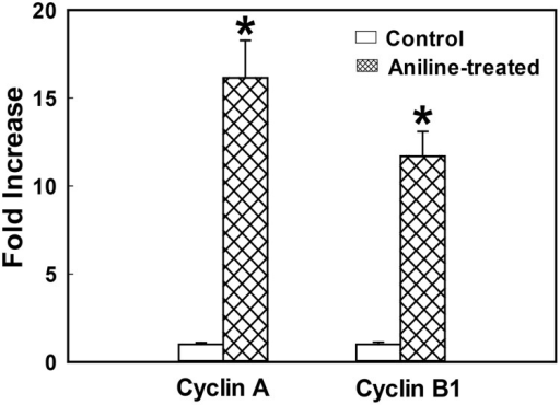 Cyclins A and B1 gene expression in rat spleens following aniline exposure.The fold change in mRNA expression (2−ΔΔCT) was determined by real-time PCR analysis. Values are means ± SD (n = 3). *p < 0.05 vs. respective controls.