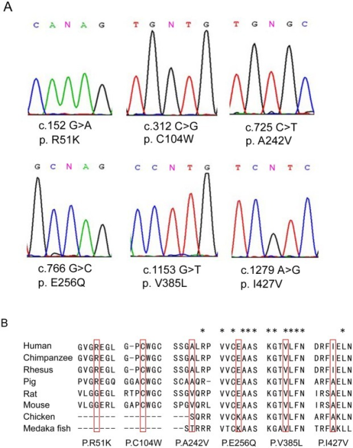 Six missense mutations in DAX-1 identified in patients with secretory azoospermia.(A) Chromatogram traces from Sanger sequencing, showing the validated missense mutations. (B) Evolutionary conservation of amino acids affected by the missense mutations. Multiple protein alignments were performed with MegAlign (Demonstration System DNASTAR, Inc.). The identification numbers of the DAX-1 protein were as follows: human (NP_000466.2), chimpanzee (XP_520991.2), rhesus (XP_002806222.1), pig (NP_999552.1), rat (NP_445769.1), mouse (NP_031456.1), chicken (NP_989924.1), and Medaka fish (NP_001104259.1). The mutant alleles are boxed, and the star (*) indicates the conserved residue.