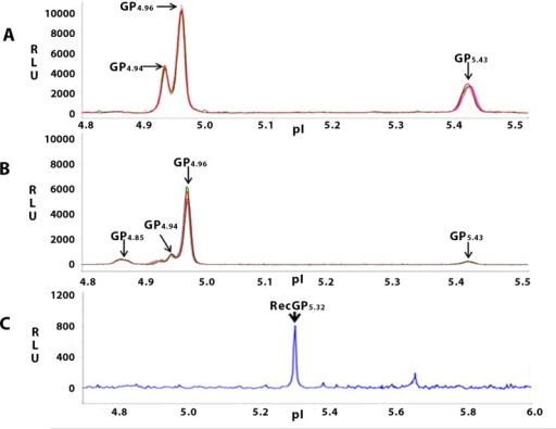 NIA profile of GRP78 in rat testicular- and cauda epididymal sperm.NIA for GRP78 was performed in 20ng of the respective sperm lysates in Premix of pI range 5–6 and spiked with pI standard 4 as the standard ladder. Figure shows a representative isoelectropherogram of GRP78 in rat testicular- and caudal- sperm (4 replicates represented by green, pink, red and grey peaks). Three peaks GP4.94, GP4.96 and GP5.43, are observed for testicular sperm (A). For caudal sperm, an additional peak GP4.85 is also observed (B). The pI of recombinant GRP78 is observed to be 5.32 (C) 'GP' represents the GRP78 peak, and the value in subscript indicates the pI of the respective peak. Experiments were performed thrice with 3 biological replicates and a minimum of 4 technical replicates for each.