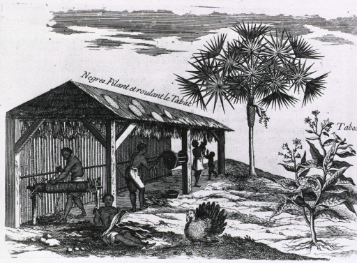 <p>Natives are rolling tobacco under a structure open on three sides, tobacco is also being hung from the rafters to dry; in the foreground is a turkey, to its right is a tobacco plant, and in the background is a plam tree.</p>