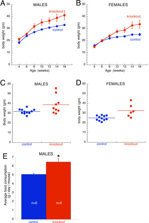Body weight and food consumption analyses of forebrain selective β3 knockouts. Growth curves of (A) male and (B) female mice (n = 4–12 mice of each gender per genotype at each age). Body weight of knockout mice was greater than controls (repeated measures ANOVA: p < 0.01 for males; p < 0.05 for females). Plotted are means ± SEM. For data points without error bars, the bars are obscured by the symbol. Body weight of individual (C) male and (D) female mice at 14 weeks of age. The horizontal line indicates the group mean. Male and female knockouts were heavier than controls (p ≤ 0.05). Note the great variability in the body weight of knockout mice, including several obviously obese male animals that are ~1.75× heavier than controls. (E) Obese forebrain selective male knockout mice consumed more food than controls (*, p < 0.05). Shown is the average daily consumption per mouse ± SEM.