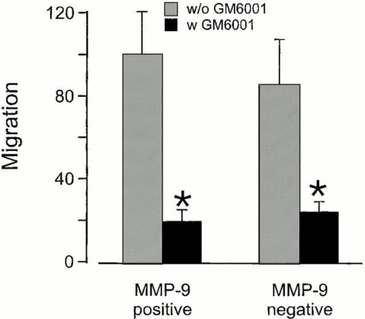 Comparative effect of MMP-9 deficiency and of a general MMP inhibitor on osteoclast migration through type I collagen. Osteoclasts of MMP-9–positive and MMP-9–negative mice were cultured on collagen-coated filters in the presence and absence of 10 μM GM6001 (average of 227 osteoclasts/filter). Their invasion through the collagen was evaluated as explained in Materials and Methods, and is shown as means ± SD of three cultures. *Significant effect compared with osteoclasts of MMP-9–positive mice cultured without inhibitor (P < 0.05).