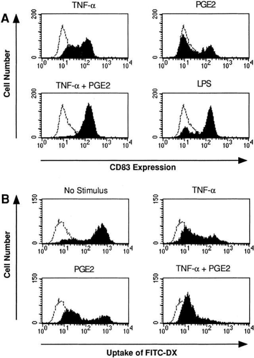 Regulatory effects of PGE2 on CD83 expression and Ag uptake. (A) Day-5 DCs were incubated with PGE2 (1 μM), TNF-α (1,000  U/ml), LPS (10 ng/ml), or PGE2 plus TNF-α. After 48 h, cells were harvested and CD83 expression was measured by flow cytometry. The isotype control (IgG2b) is also presented (dotted lines). (B) Day-5 DCs were  incubated with PGE2 (1 μM), TNF-α (1,000 U/ml), or PGE2 plus  TNF-α. After 24 h, cells were harvested and incubated with FITC-DX  for 30 min at 37°C (controls at 0°C, dotted lines), washed, and analyzed by  flow cytometry.