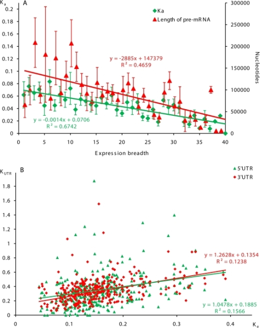 Correlations between the level of human-mouse evolutionarily divergence in protein coding and untranslated regions of human PK genes, expression breadth, and the size of pre-mRNA.A. Correlation between non-synonymous divergence, PK expression breadth and the size of pre-mRNA. Breadth of gene expression was estimated as the number of organ and tissue sources of gene-specific ESTs. Data are presented as averages and SEM. B. Correlations between evolutionarily divergence in protein coding regions and UTRs of PK genes.