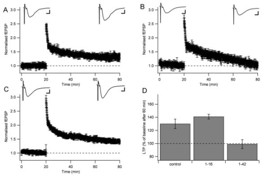 Aβ1-16 does not inhibit hippocampal long-term potentiation (LTP). (A) Control LTP elicited by three trains (20 impulses, 50 Hz) separated by 5 seconds. Data points are normalized field EPSP initial slope measurements ± standard errors of the mean. Average (n = 20) field EPSPs before and 60 minutes after the induction of LTP are shown on top. (B) LTP elicited in the presence of oligomerized Aβ1-42 (positive control). (C) LTP elicited in the presence of Aβ1-16. Scale bars represent 5 ms and 0.1 mV. (D) Comparison between LTP 60 minutes after the induction in control, in Aβ1-16 and in Aβ1-42.