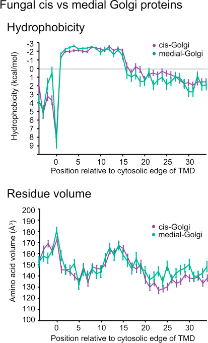 Properties Shared between TMDs from Early and Late Golgi, Related to Figure 1Fungal proteins from the early (cis) and later (medial) parts of the Golgi data set were analyzed by plots of mean residue hydrophobicity and amino acid volume. Error bars indicate standard error of the mean.