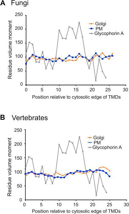Positional Analysis of Residue Size Moment, Related to Figure 5(A and B) The size moment at each position of a protein was defined as being the sum of the vector of the volume of that residue and of the vectors of the volumes of the six residues on either side (i.e., a window of seven residues which approximates to two turns of an α helix—see Experimental Procedures). This moment was calculated at each position for each protein and mean values at each position determined for all the proteins in the same dataset. Glycophorin A dimerizes via a GXXXG motif in its TMD and serves as a positive control. The different datasets from the different organelles do not show large differences in size moment, and hence are not differentially enriched in GXXXG-like dimerization motifs.