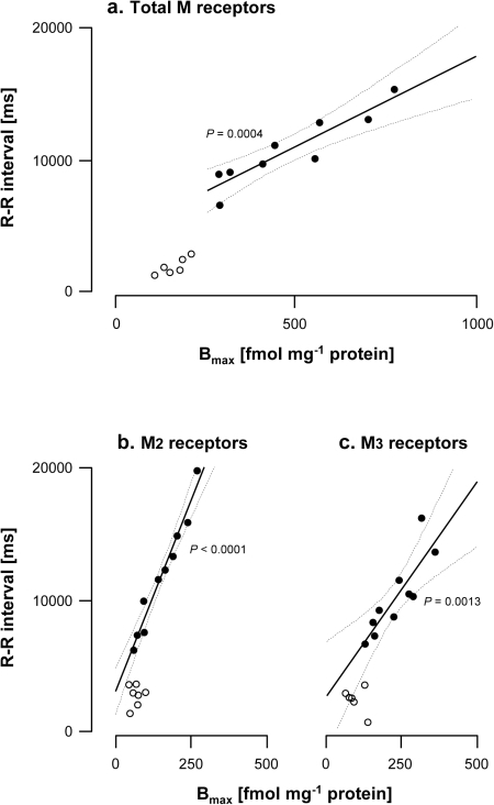 Correlations between R-R interval and total, M2 and M3 muscarinic receptor density in hearts from normal (N) and vagal hyperreactive (H) rabbits.R-R intervals were measured in conscious rabbits challenged with PNE 500 µg kg−1 following the procedure described in Material and Methods. Total, M2 and M3 muscarinic receptor densities in hearts (Bmax; fmol mg−1 protein) were determined from Scatchard analysis of the saturation data using [3H]NMS, [3H]AF-DX 384 and [3H]4-DAMP, respectively, as radioligands. Binding conditions were as described in Material and Methods. Each symbol represents one animal. (a) Total muscarinic receptors; n = 9 H (full symbols) and 6 N (open symbols). (b) M2 muscarinic receptors; n = 10 H (full symbols) and 7 N (open symbols). (c) M3 muscarinic receptors; n = 10 H (full symbols) and 6 N (open symbols).