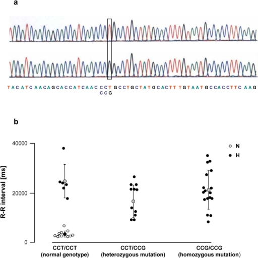 Polymorphism of the M2 cholinergic muscarinic receptor gene of normal (N) and vagal hyperreactive (H) rabbits.(a) DNA sequence analysis of the coding fragment of the M2 muscarinic receptor gene (Chmr2) showing the normal CCT codon and the single nucleotide substitution at position 1311 (G instead of T). (b) The severity of vagal pauses was evaluated in conscious animals by measuring the duration of R-R interval on the ECG recording after challenge with PNE 500 µg kg−1 following the procedure described in Material and Methods. DNA sequence analysis of the coding fragment of the M2 muscarinic receptor gene was carried out as described in Material and Methods. Each symbol represents one animal.
