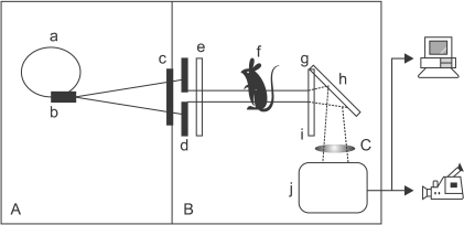 Schematic diagram of the experimental set-up. Polychromatic X-rays (A), are emitted from the bending magnet device (b) of the storage ring (a) then pass through two slits (c: fixed one in the vacuum, d: changeable in the air) to control the beam size, attenuator set (e) for acquiring a good background image, and sample (f). The X-rays are processed by the scintillator (g) and the resulting image information is then converted into visible light (B). This visible light is magnified (C) by lens (i) after being reflected by the mirror (h) and transmitted to a computer or digital video recorder by the CCD camera (j).