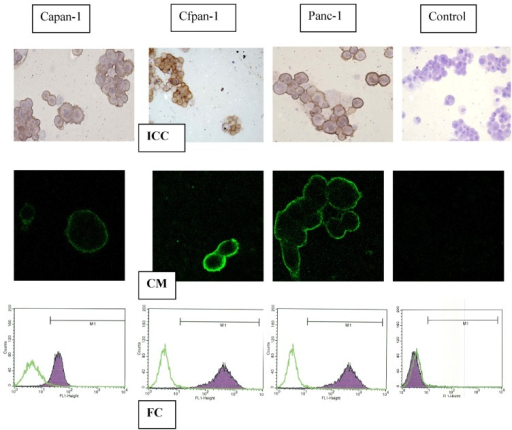 Flow cytometry (FC), confocal microscopy (CM) and immuno-cytochemistry (ICC) after incubation in C595 in three pancreatic cancer cell lines, compared with controls [16].