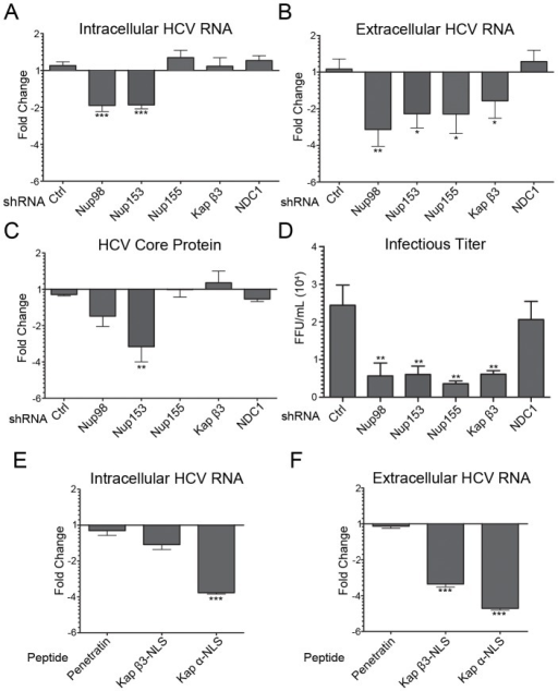 Depletion of Nups and Kaps inhibits HCV replication.A–D) Huh7.5 cells were coinfected with HCV and lentivirus encoding shRNAs directed against Nup98, Nup155, Nup153, Kap β3/IPO5, NDC1, or a scrambled control sequence for four days. The effects of Nup or Kap depletion on HCV titers were evaluated by qPCR analysis of HCV RNA levels in cell extracts (panel A) or in the culture supernatant (panel B) from HCV infected Huh7.5 cells co-infected with and without lentivirus. In addition, intracellular levels of the HCV core protein were examined by quantitative western blotting using antibodies specific for HCV core (panel C). Values for each sample are normalized to HPRT mRNA (Panel A and B) or α-tubulin (Panel C) and are expressed as fold-change relative to HCV infected cells not treated with lentivirus. Error bars indicate standard error (based on ≥3 experiments) and statistics are based on t-tests comparing each Nup or Kap specific shRNA treated sample to samples expressing the scrambled shRNA control. D) Huh7.5 cells were grown as described in panel A and the infectious titers of HCV particles present in the media of cells depleted of the indicated proteins were determined. Focus-forming units were determined using indirect immunofluorescence microscopy. Values shown represent focus-forming units per mL of medium (FFU/mL). E–F) Huh7.5 cells were infected with HCV and 4 hrs post infection a penetratin peptide, a Kap β3-NLS peptide, or a penetratin peptide containing a N-terminal Kap α NLS (Kap α-NLS) was added to the media. Four days later the effects of these peptides on HCV RNA levels in intracellular (panel E) and extracellular (panel F) compartments were assessed by qPCR analysis. Values for each sample are normalized to HPRT mRNA levels and expressed as fold change relative to cells receiving no peptide. Error bars indicate standard error (based on ≥3 experiments) and statistics based on t-tests comparing cells treated with penetratin alone to those treated with the Kap β3-NLS peptide or the Kap α-NLS containing peptide. p-values less than 0.05 (*), 0.01 (**), and 0.001 (***) are indicated.