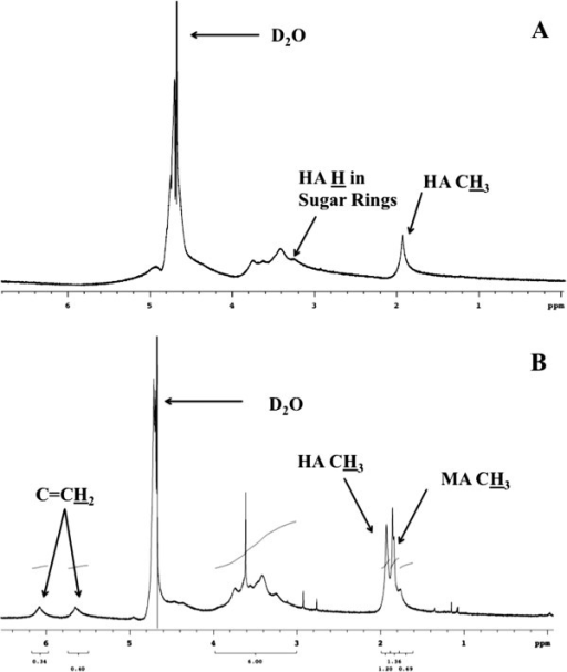 1H NMR spectra of HA (A) and HA-MA (B) with proton peaks in the methyl groups as well as the sugar rings labeled. 1H for relevant peaks in each figure have been underlined.