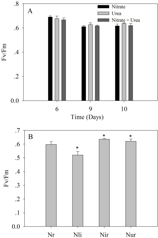Photosystem II efficiency (Fv/Fm).A) A. anophagefferens cultures grown on urea, nitrate, and a mixture of urea and nitrate at the 6-, 9- and 10-day sampling points; B) A. anophagefferens cultures grown under nitrogen-replete (Nr), limited (Nli) and recovery conditions. Nir and Nur represent nitrate and urea addition, respectively. Nli was compared with Nr while Nir and Nur were compared with Nli. Significance values were expressed as follows: * P <0.05, ** P <0.001. Error bars represent standard deviation of the mean for the three biological replicates.