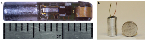 Photographs of the injectable transmitter and the PNNL-developed micro-battery used by the injectable transmitter: (a) the injectable transmitter; (b) the micro-battery standing next to a commercial 337 button-cell battery which is used by the existing commercial JSATS transmitters.(photos by H.L.)