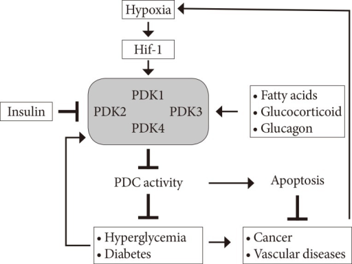 isoenzymes therapeutic targets in cancer Lactate dehydrogenase a in cancer:  or a predictive biomarker for many types of cancer and as a therapeutic target for new  ldh isoenzymes in .
