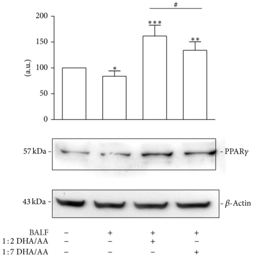 "Effects of ω-3/ω-6 PUFA ratios on PPARγ expression. PPARγ relative protein content in A549 cells stimulated with BALF and treated with 50 μM 1 : 2 or 1 : 7 DHA/AA ratios. Data are expressed as ""a.u."" (arbitrary units) of the densitometric values, normalized on the corresponding β-actin. The value of unstimulated cells was arbitrarily set as 100. Data are presented as mean ± standard deviation of 6 independent determinations (n = 6). The image is representative of all the WB experiments. PUFA, polyunsaturated fatty acid; PPAR, peroxisome proliferator-activated receptor; BALF, bronchoalveolar lavage fluid; DHA, docosahexaenoic acid; AA, arachidonic acid; WB, western blot. *P < 0.05 BALF versus unstimulated cells. **P < 0.01 1 : 7 DHA/AA versus BALF and unstimulated cells. ***P < 0.001 1 : 2 DHA/AA versus BALF and unstimulated cells. #P < 0.05 1 : 2 DHA/AA versus 1 : 7 DHA/AA."