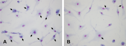 Representative images illustrating amastigote-form parasite numbers present inside macrophages infected with T. cruzi in (A) the absence and (B) the presence of 250 μM mixed length 1,4/1,5 triazole-linked linear oligomers. Arrows indicate cells infected with T. cruzi.