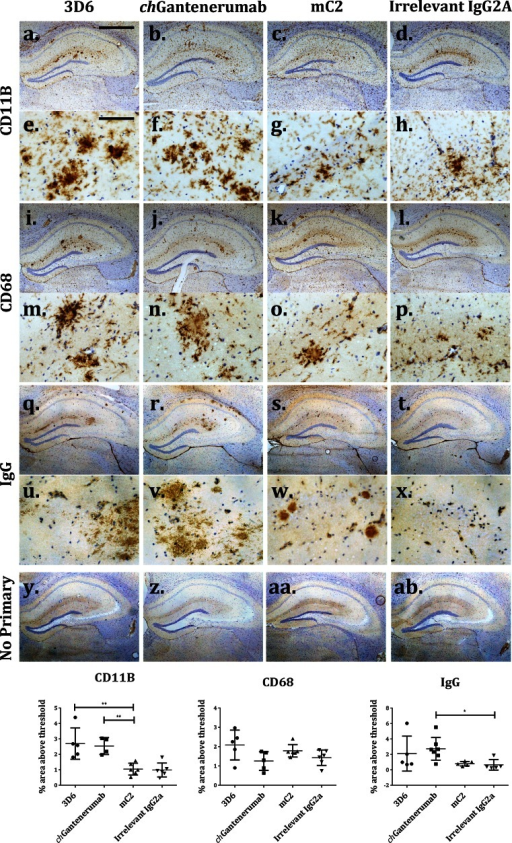 Expression of microglial activation markers after antibody injection. Expression of microglial markers CD11B and CD68 and IgG distribution in the hippocampus 7 days after injection of anti-Aβ antibodies. a–h Representative images of CD11B expression. i–p Representative images of CD68. q–x Representative images of IgG distribution. y–ab No primary control sections. Pictures are taken with a 5× objective and 40× objective, scale bars 100 and 800 µm, respectively. Staining was quantified as area above threshold of staining and analysed by one-way ANOVA and Tukey post hoc test (n = 6/7). 3D6 induced a significant increase in the expression of CD11B, compared to injection with mC2 and irrelevant IgG2a (Fig. 4a–h, p = 0.0023 and p = 0.0017, respectively). chGantenerumab also induced CD11B upregulation in comparison to mC2 and irrelevant IgG2a (p = 0.0093 and p = 0.007, respectively). chGantenerumab has significantly higher levels of IgG than control injected animals (p = 0.011)