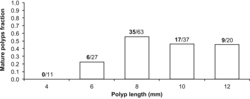 Fraction of sexually mature individuals per size class (mm).Fraction of sexually mature individuals per size class in millimeters, collected at Elba Isle. The values above the bars indicate the number of sexually mature polyps (bold) out of the number of polyps analyzed per size class (N = 158).