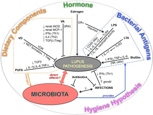 Emerging evidences point to a potential link between SLE and microbiota.