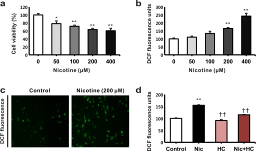 The effects of nicotine on cell viability and reactive oxygen species (ROS) generation in human tubular epithelial cells.(a) The HK-2 cells were treated with nicotine at different concentrations, namely, 0, 50, 100, 200, and 400 μM. Cell viability was assessed using the WST-1 assay after treatment with nicotine for 24 h. (b) The cells were incubated for 24 h with different nicotine concentrations, namely, 0, 50, 100, 200, and 400 μM. ROS generation was detected using the fluoroprobe, 2′,7′-dichlorodihydrofluorescein diacetate. *P < 0.05 or ** P < 0.01 compared with the controls. (c) ROS formation was detected using ROS-sensitive fluorescent dye. (d) The HK-2 cells were exposed to nicotine (200 μM for 24 h) with or without pretreatment with hexamethonium chloride (1 mM) for 3 h. **P < 0.01 compared with the controls. ††P < 0.01 compared with nicotine treatment. Each column represents the mean ± the standard error of the mean. The data are representative of at least three independent experiments.
