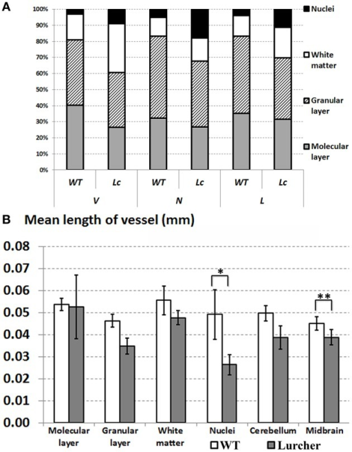 Comparing quantitative parameters of microvessels between wild type (WT mice) and Lurcher mice. (A)—Relative proportions of the individual components of the cerebellum; (B)—Mean length of vessels in the cerebellum, its individual components and in the midbrain. Corresponding anatomical compartments were compared using the Mann-Whitney U test (significant results are presented within the diagrams: *p < 0.05, **p < 0.01).