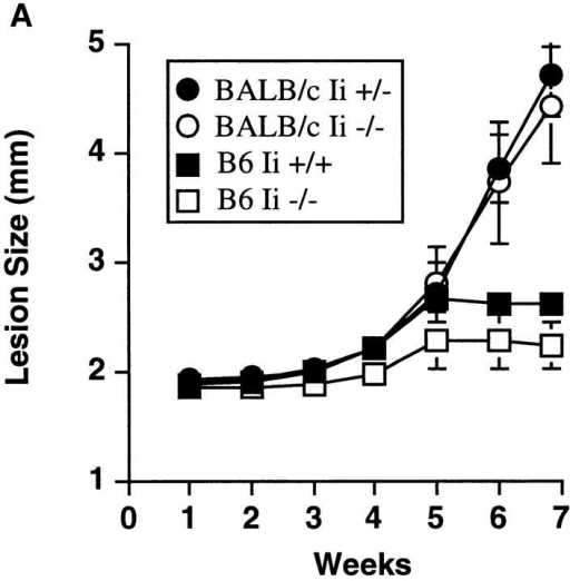 BALB/c Ii −/−  mice are susceptible to L. major  infection and generate type 2  immune responses. (A) Groups  of fourth generation BALB/c Ii  +/− or Ii −/− and C57BL/6  (B6) Ii + or Ii +/− mice were  infected in the hind footpads  with promastigotes of L. major,  and the size of the footpad lesions measured using a metric  caliper. Data represent means  and standard deviations of footpad lesions in four separate experiments involving 12 BALB/c  Ii −/− mice. (B) Lymph node  cells were prepared from individual mice after 7 wk of infection  and were cultured with and without soluble Leishmania antigens as  described in the Materials and  Methods. After 48 h, the supernatants were assayed for IL-4 by  ELISA. Cells cultured without  antigen yielded <20 U/ml IL-4.  C57BL/6 (B6) mice are compared  to BALB/c Ii +/− and −/−  mice. Values represent means and  standard deviations of triplicate  determinations for individual animals, and are representative of  three separate experiments.