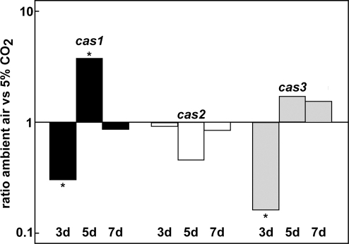 Expression analyses of cas genes.Real time PCR was performed with total RNA isolated from S. macrospora wild type grown at 27°C in liquid BMM for three, five and seven days under ambient air conditions or 5% CO2. Comparisons are given as logarithmic values of the ambient air/5% CO2 ratios and are mean expression ratios from two independent biological replicates, each done in triplicate. For normalization, transcript levels of the SSUrRNA were calculated as described in Material and Methods. Asterisk indicate significance according to REST [70].