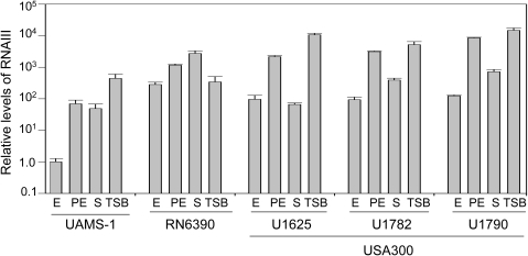Production of RNAIII as a function of strain, growth phase, and growth medium.RNA was extracted from each strain grown in biofilm medium (BM) during the exponential (E, OD560 = 1.0), post-exponential growth phase (PE, OD560 = 3.0) and stationary (S) phases and the amount of RNAIII determined by qRT-PCR. RNA was also isolated from stationary-phase cultures grown in TSB. The value observed with UAMS-1 during the exponential growth phase was set at 1.0 with the results observed for other strains shown relative to this value. Results are shown as the mean ± the standard deviation of triplicate samples. Statistical analysis of the results observed in stationary-phase samples grown in BM confirmed a significant difference between RN6390 and all other strains and between UAMS-1782 and UAMS-1790 by comparison to both UAMS-1 and UAMS-1625.