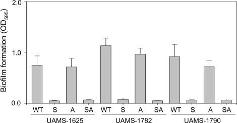 Impact of sarA and agr on biofilm formation in USA300 isolates.Biofilm formation was assessed in each of three USA300 isolates (WT) and their isogenic sarA (S), agr (A), and sarA/agr (SA) mutants using a static microtiter plate assay. Results are shown as the mean ± the standard deviation of 6 replicate samples. Statistical analysis confirmed a significant difference between each wild-type strain and its isogenic sarA and sarA/agr mutants but no difference between any wild-type strains and its agr mutant or between isogenic sarA and sarA/agr mutants.