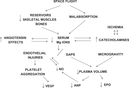 Proposed mechanisms for space flight-related vascular complications requiring magnesium repacement and possible correction of at least four gene deficiencies.Abbreviations: ANP, atrial natriuretic peptide; EPO, erythropoietin; NO, nitric oxide; VEGF, vascular endothelial growth factor.