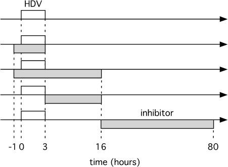 Representation of time-lines for exposure of primary hepatocytes to HDV and potential inhibitors.For the five time-lines shown the open box indicates the period of HDV exposure and the shaded box the exposure to inhibitor. The effects on HDV replication of such treatments with three different inhibitors are summarized in Table 1.
