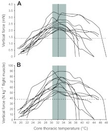 Upper limit traces of maximal vertical force production as a function of corethoracic temperature for each of the 11 Helicoverpa zeamales tested. (A) Vertical force versus core thoracictemperature. (B) Flight muscle mass-specific vertical forceversus core thoracic temperature. The horizontal dashedline depicts the mean vertical force needed to counteract the mean body massof males tested. The vertical dashed line shows the mean core thoracictemperature at which mean maximal vertical force is exerted. The gray areaindicates the range of temperatures at which peak maximal force productionwas observed for different males. Incomplete traces show missing data due todetachment from the force transducer during the experiment.