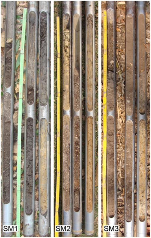 Photographs of the 3 meter cores extracted from the SM1, SM2 and SM3 sites.The thickness of the anthropogenic sediments is 2.5, 1.7 and 2.5 meters respectively. In SM2 the first 50 cm are made of sediments that have been deposited on top of the archaeological site in modern times.