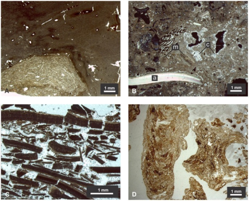 "Micromorphology of SM1's key features and units.A) Fragment of burnt earth from Unit II showing a relatively undisturbed mass of clay with a cluster of coarser material; the association of two different materials suggests reworking, but the presence of root channels indicates it was limited (PPL); b) Unit IIIa at depth 45 cm; ""a"" indicates an aragonitic shell fragment, ""m"" indicates recrystallized shell fragments and ""c"" indicates precipitated calcite crystals (XPL); c) Unit V at depth 130 cm entirely constituted by burnt shell fragments and precipitated calcite (plane polarized light, PPL); d) Biogenic burnt earth fragments at depth of 75 cm; on the left a longitudinal cut of the chamber; on the right a transversal cut of the chamber (PPL)."